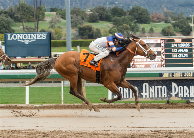 Tough Sunday winning Sensational Star Stakes. (BENOIT photo)