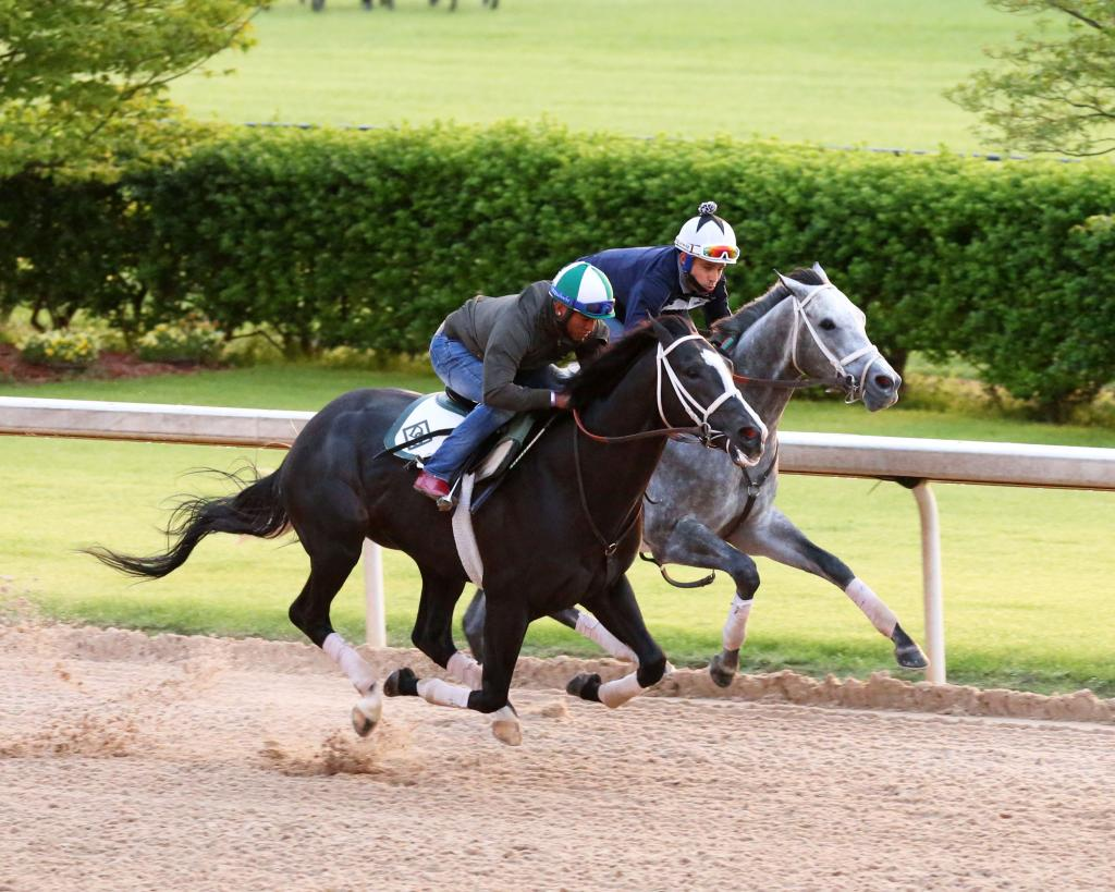 Grade 1-placed Winning Impression, inside, during morning exercise with a stablemate.