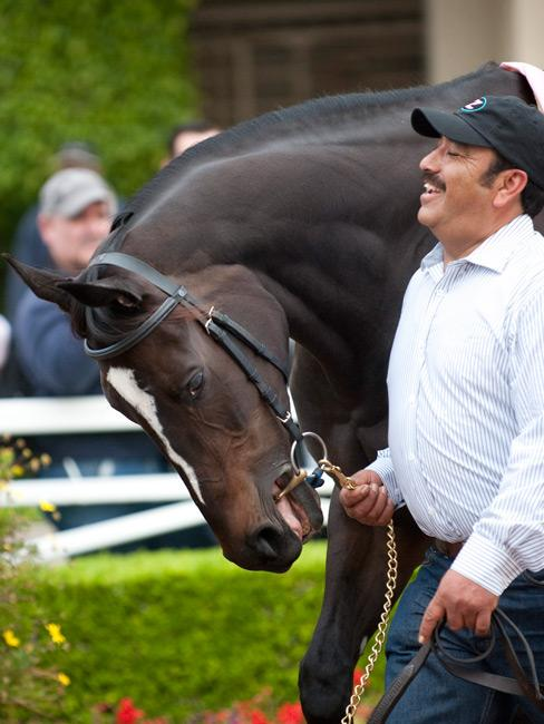 Zenyatta and her groom Mario Espinoza were constant companions during her racing career. (Eclipse Sportswire)