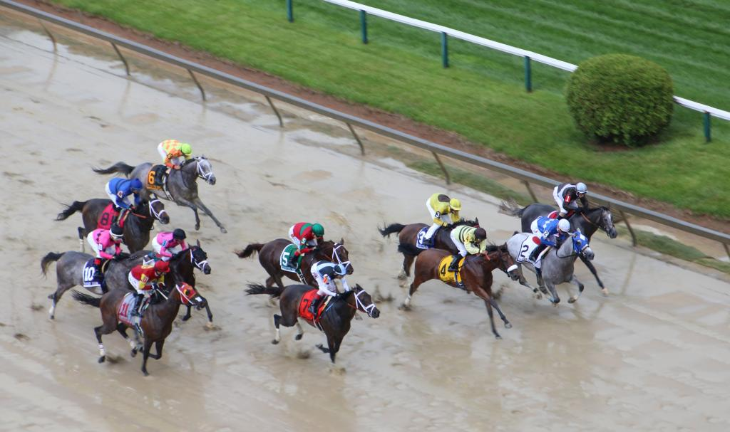 Horse Racing And Rainbows On Black Eyed Susan Day