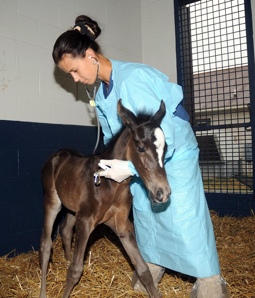 Examining a foal. (Courtesy of Hagyard Equine Medical Institute.)