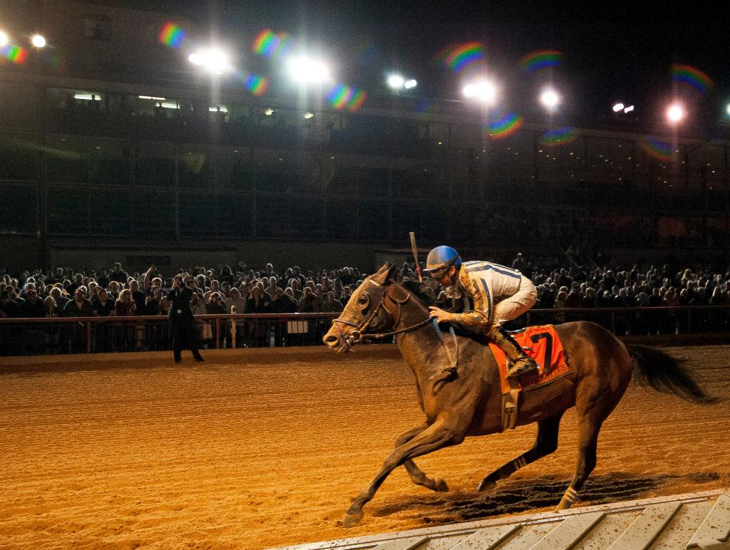 Imperative winning the 2014 Charles Town Classic. (Eclipse Sportswire)