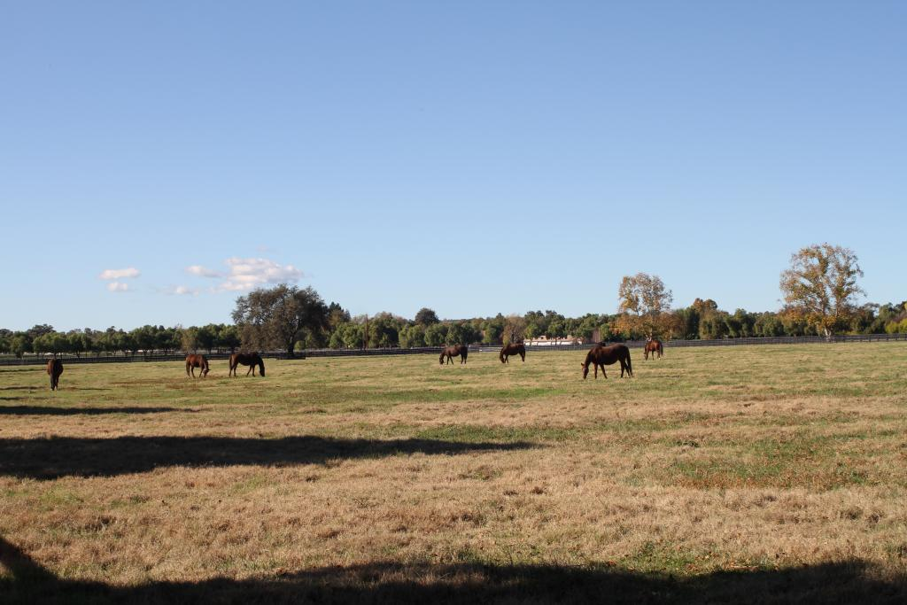 Mares in the field at Barton Thoroughbreds. (Courtesy of TDN/Jill Williams)