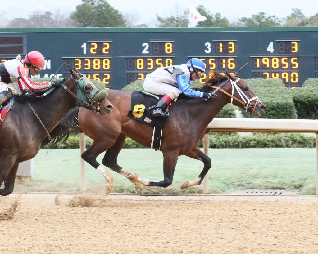 Market King wins a maiden race at Oaklawn Park on Feb. 9. (Coady Photography)