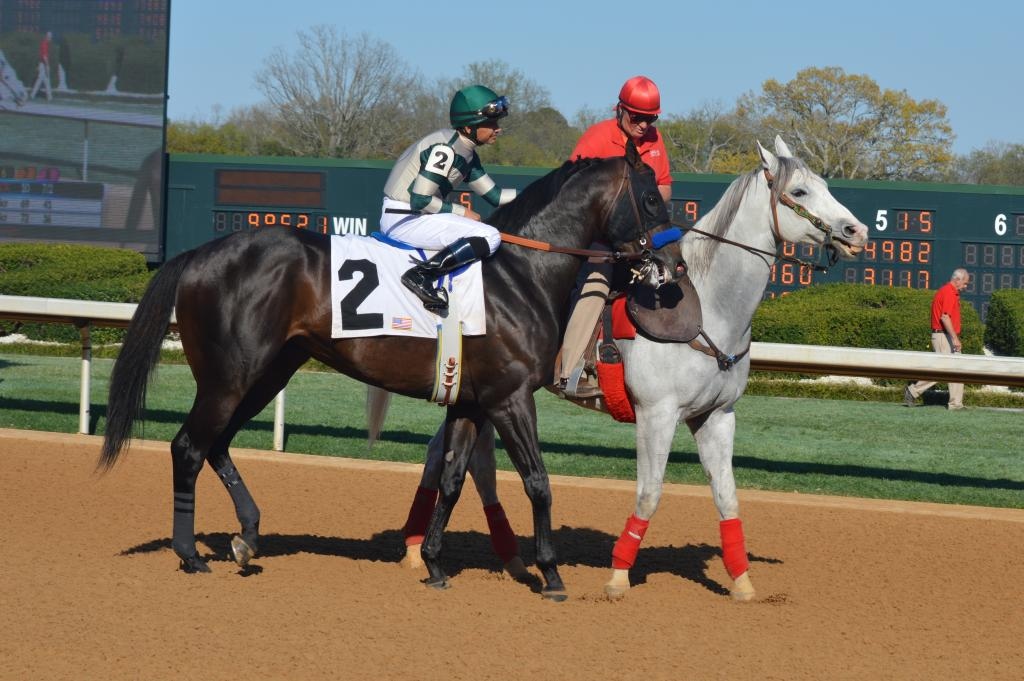 Essex Handicap winner Mor Spirit and Mike Smith in the post parade. (Sara Dacus photo)
