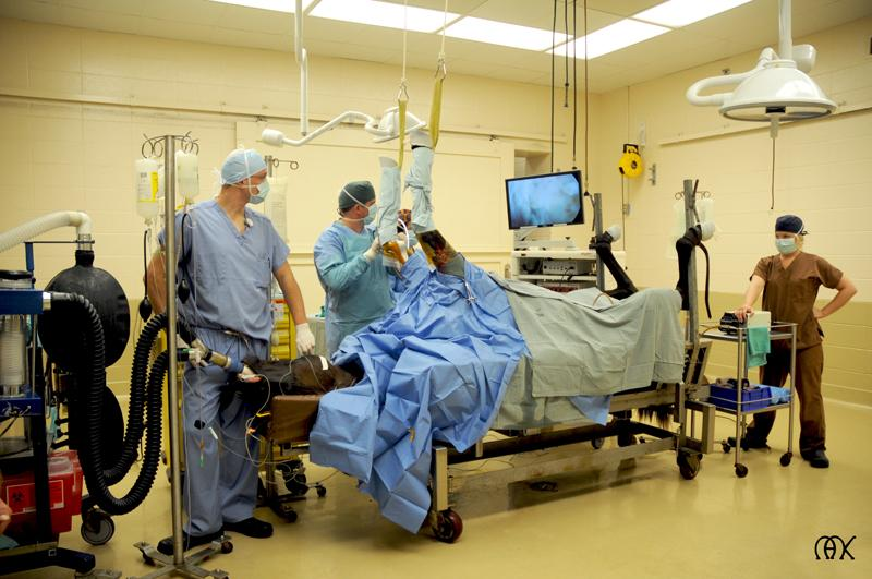 Surgery at Hagyard. (Courtesy of Hagyard Equine Medical Institute.)
