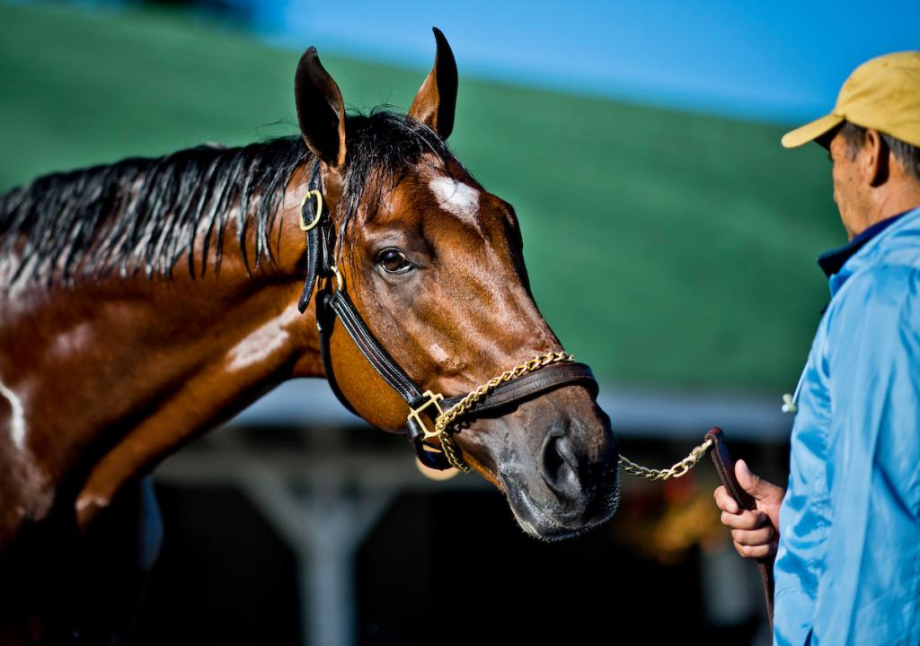 Patch at Churchill Downs. (Eclipse Sportswire)