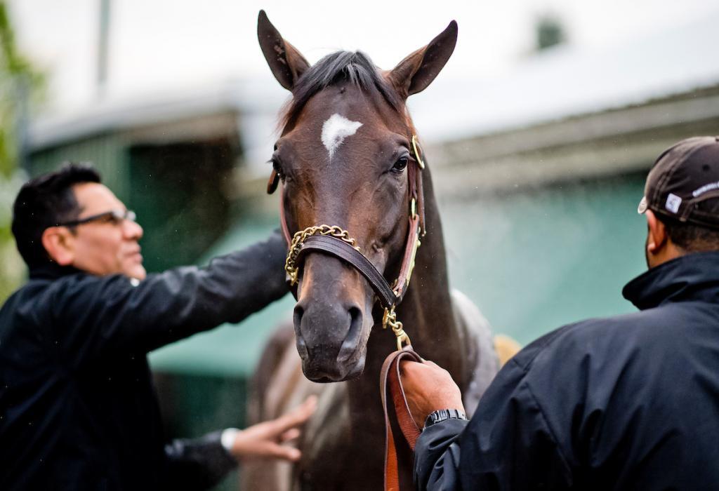 Kentucky Derby winner Always Dreaming at Pimlico. (Eclipse Sportswire)