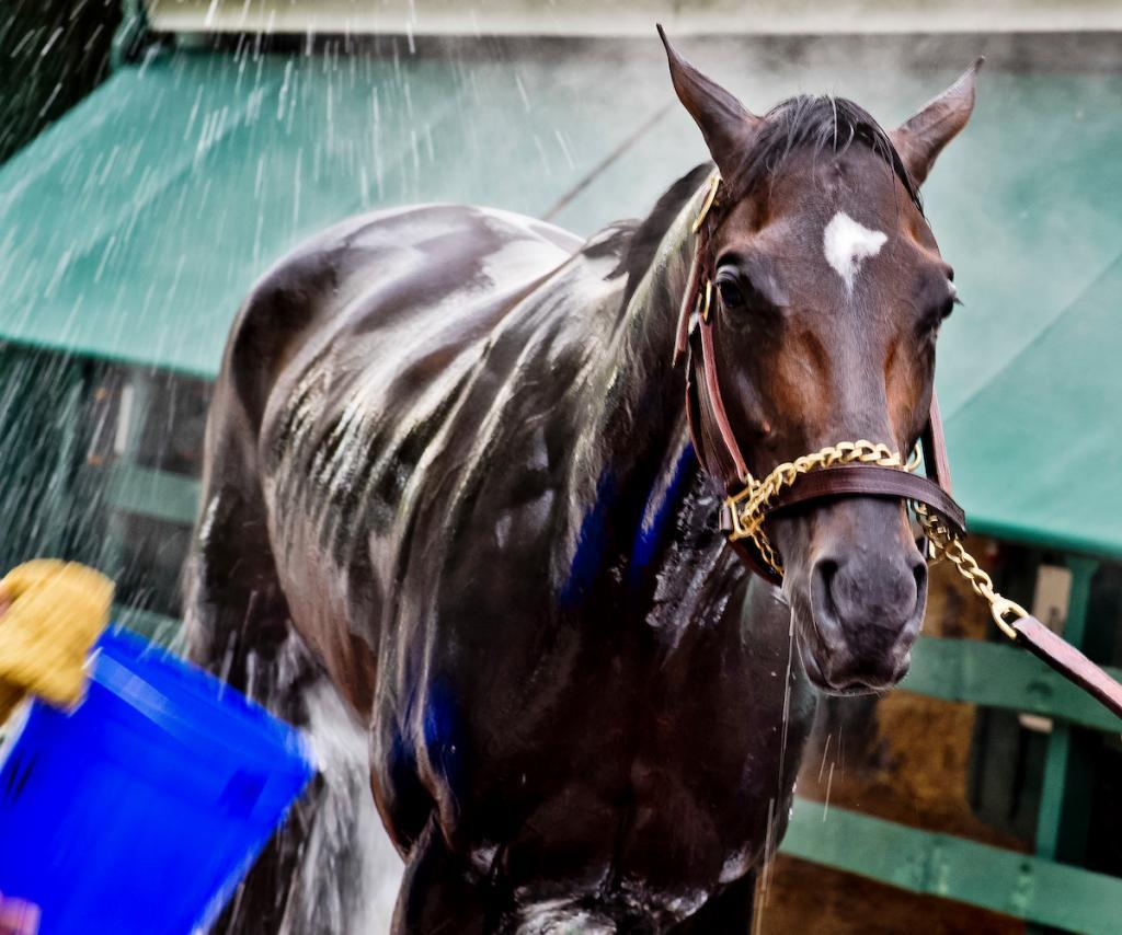 Kentucky Derby winner Always Dreaming gets a bath at Pimlico. (Eclipse Sportswire)
