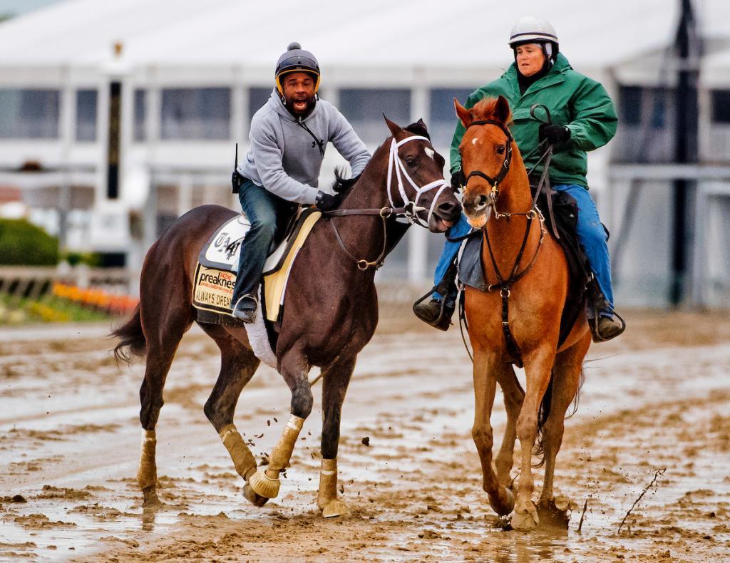 Kentucky Derby winner Always Dreaming jogs at Pimlico. (Eclipse Sportswire)