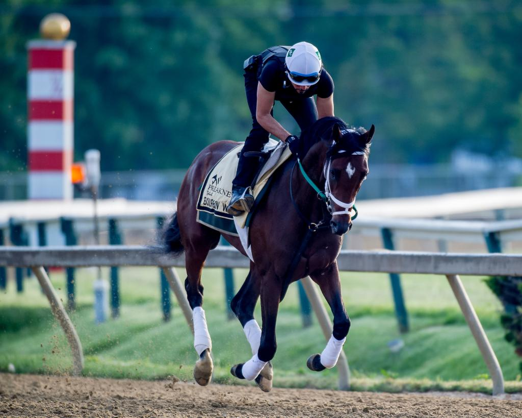 Preakness Stakes eighth-place finisher Bourbon War. (Eclipse Sportswire)