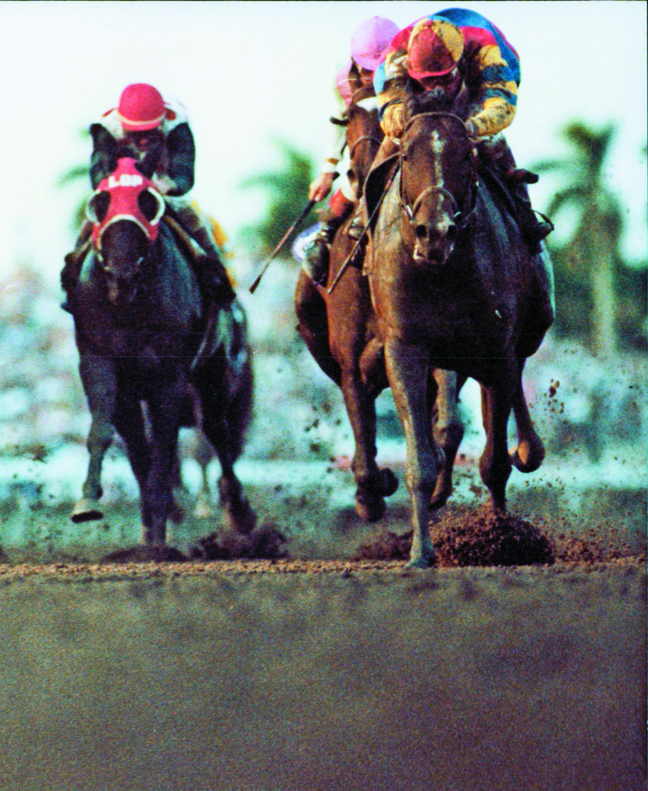 A.P. Indy wins the 1992 Breeders' Cup Classic at Gulfstream Park.