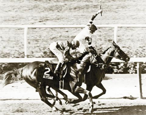 Alydar finishes second to Affirmed in the 1978 Belmont Stakes.