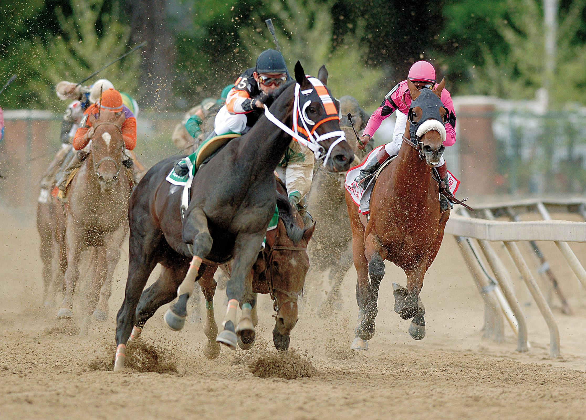 Afleet Alex stumbles as Scrappy T veers into his path in the Preakness.