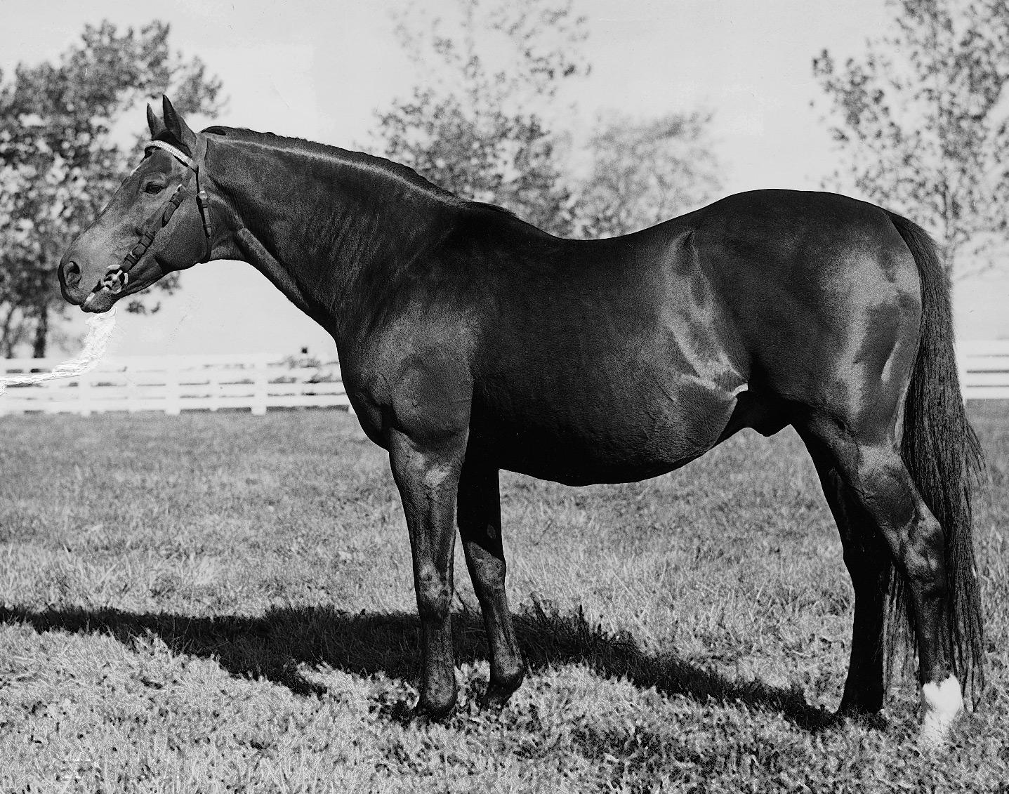Count Fleet as a sire