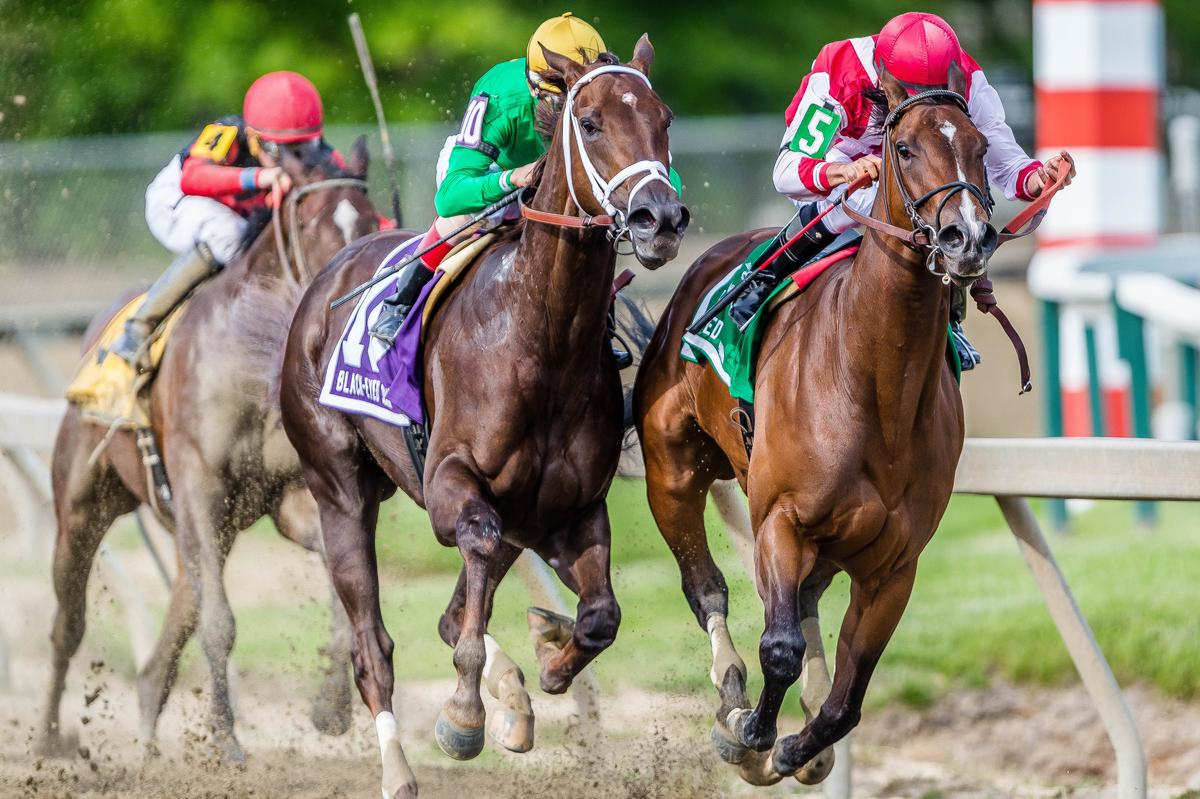 Special Filly Go Maggie Go Rolls In Black Eyed Susan