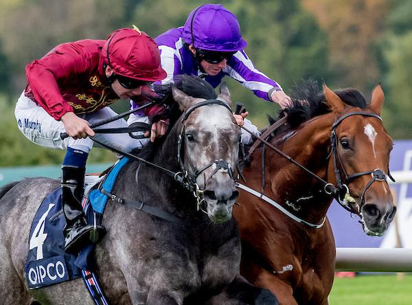 Where Does Top Euro Roaring Lion Fit Best In Breeders Cup