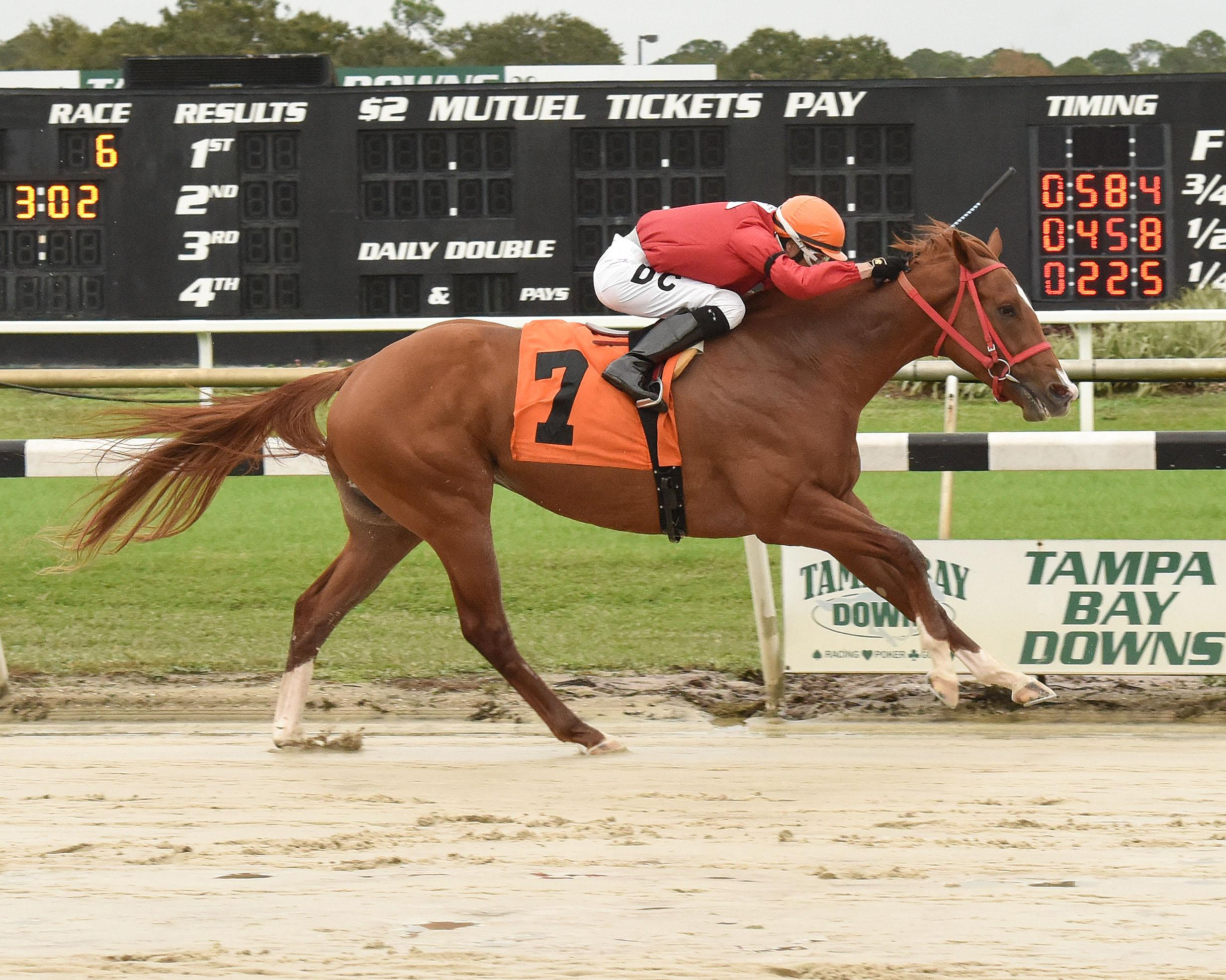 2019 Holy Bull Stakes Cheat Sheet America S Best Racing