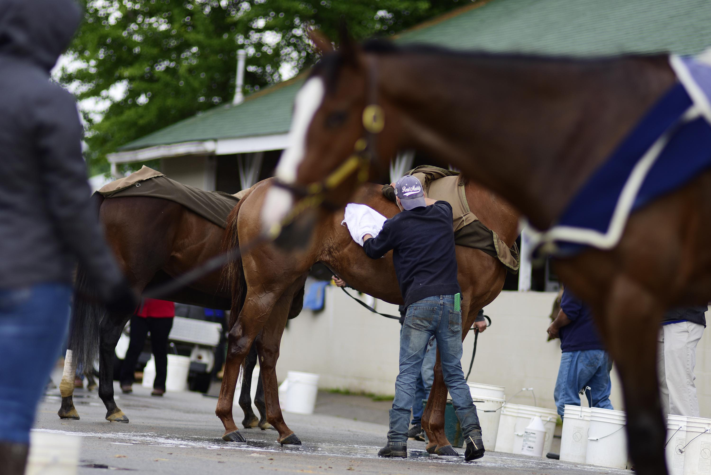 Grooms tend to racehorses at Churchill Downs.