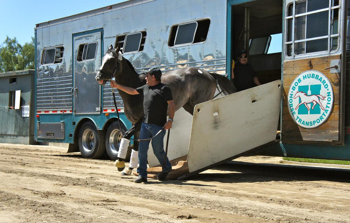 Home at last! Arrogate departs the van at Baffert's barn.
