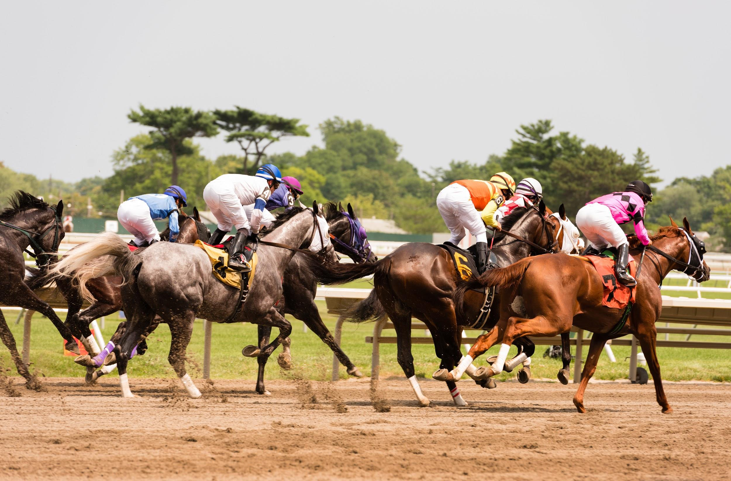 Horse Racing Winning Distances Explained