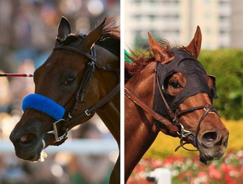 A shadow roll (left), blinkers (right), and tongue tie (both).