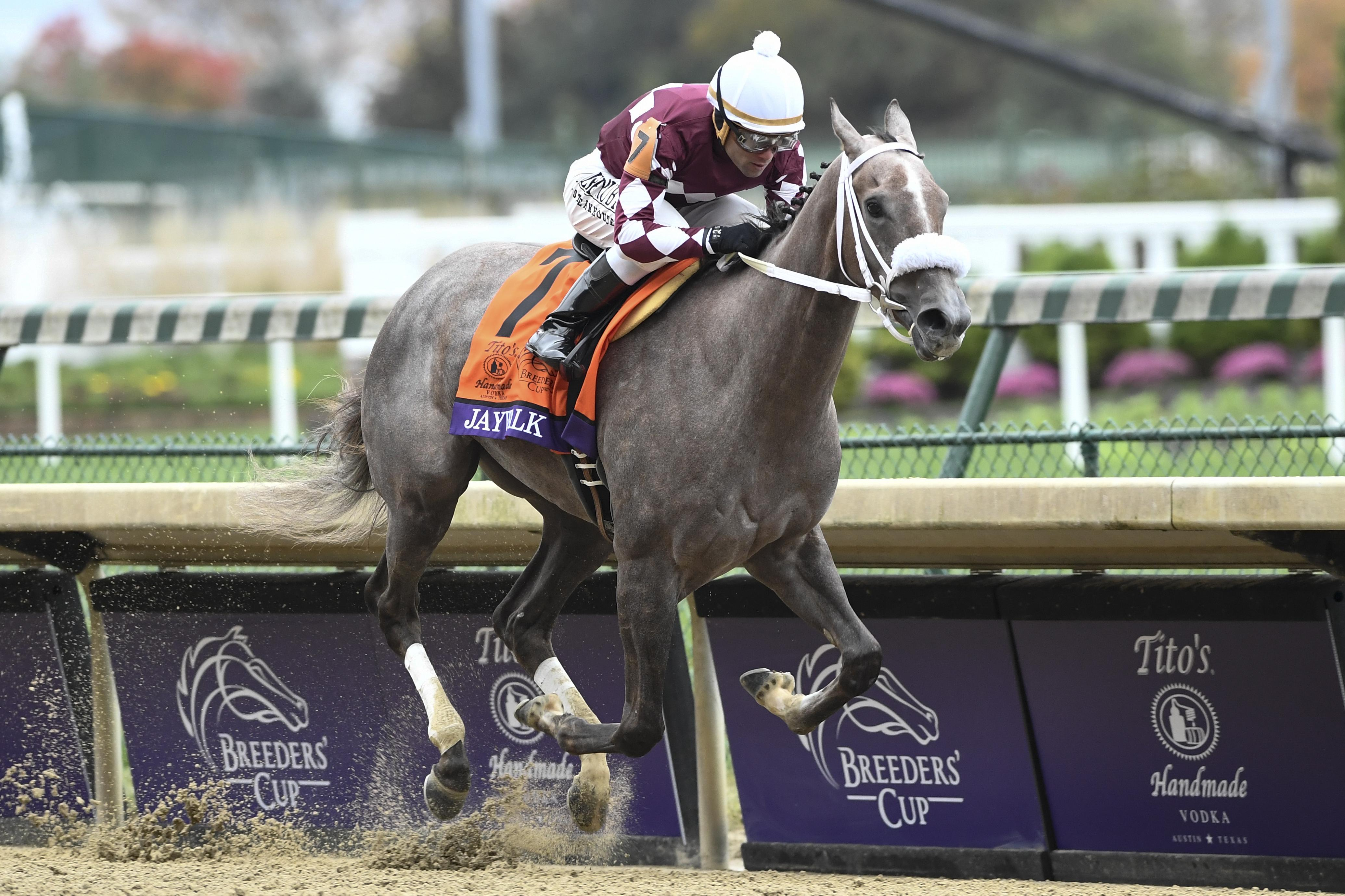 Game Winner Jaywalk Newspaperofrecord Dazzle On Breeders