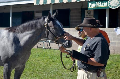 Thomas inspects a yearling Thoroughbred.