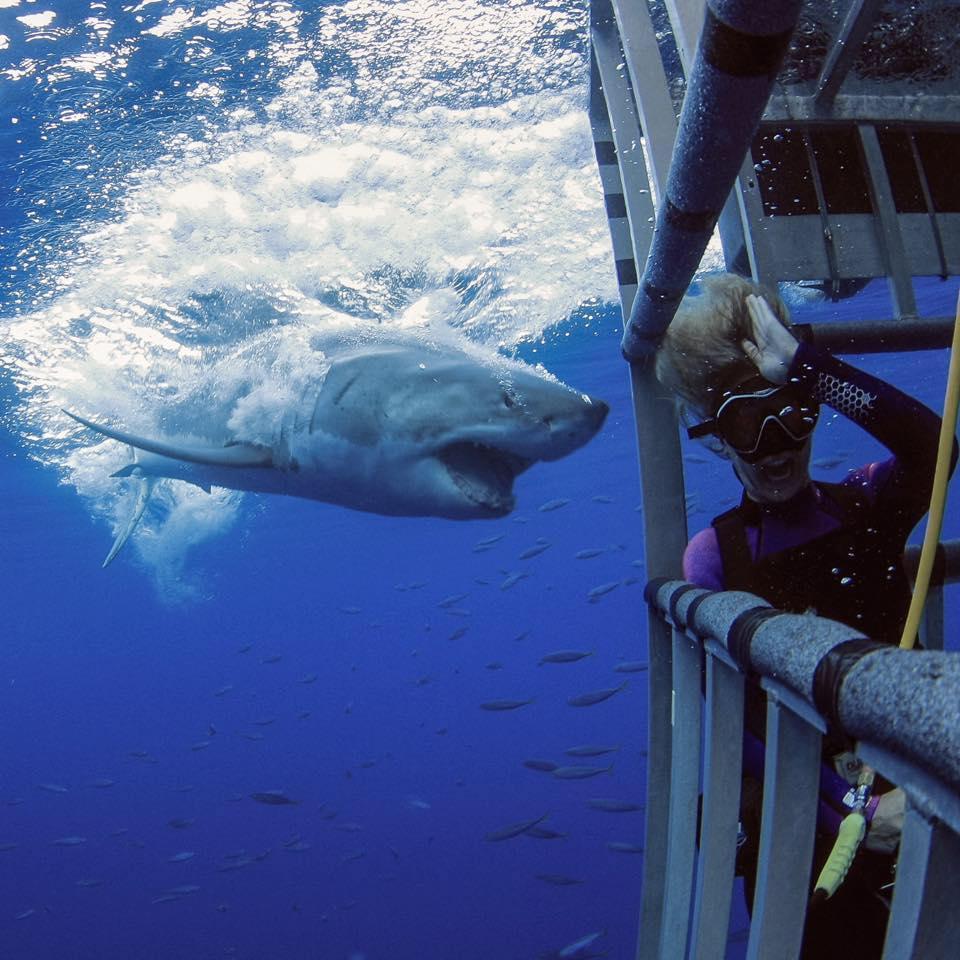 Lipkin with a great white shark.