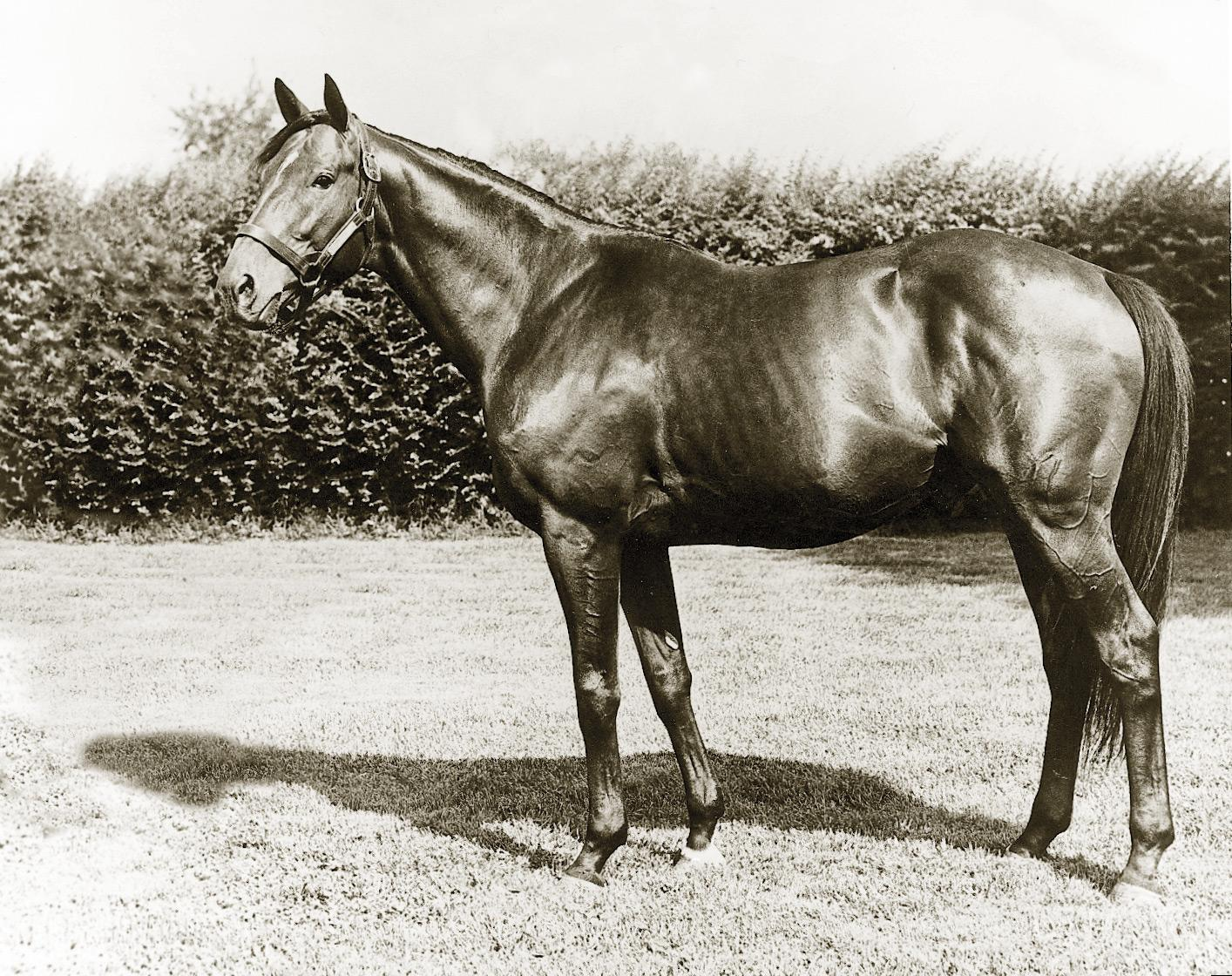 Nashua as a stallion.