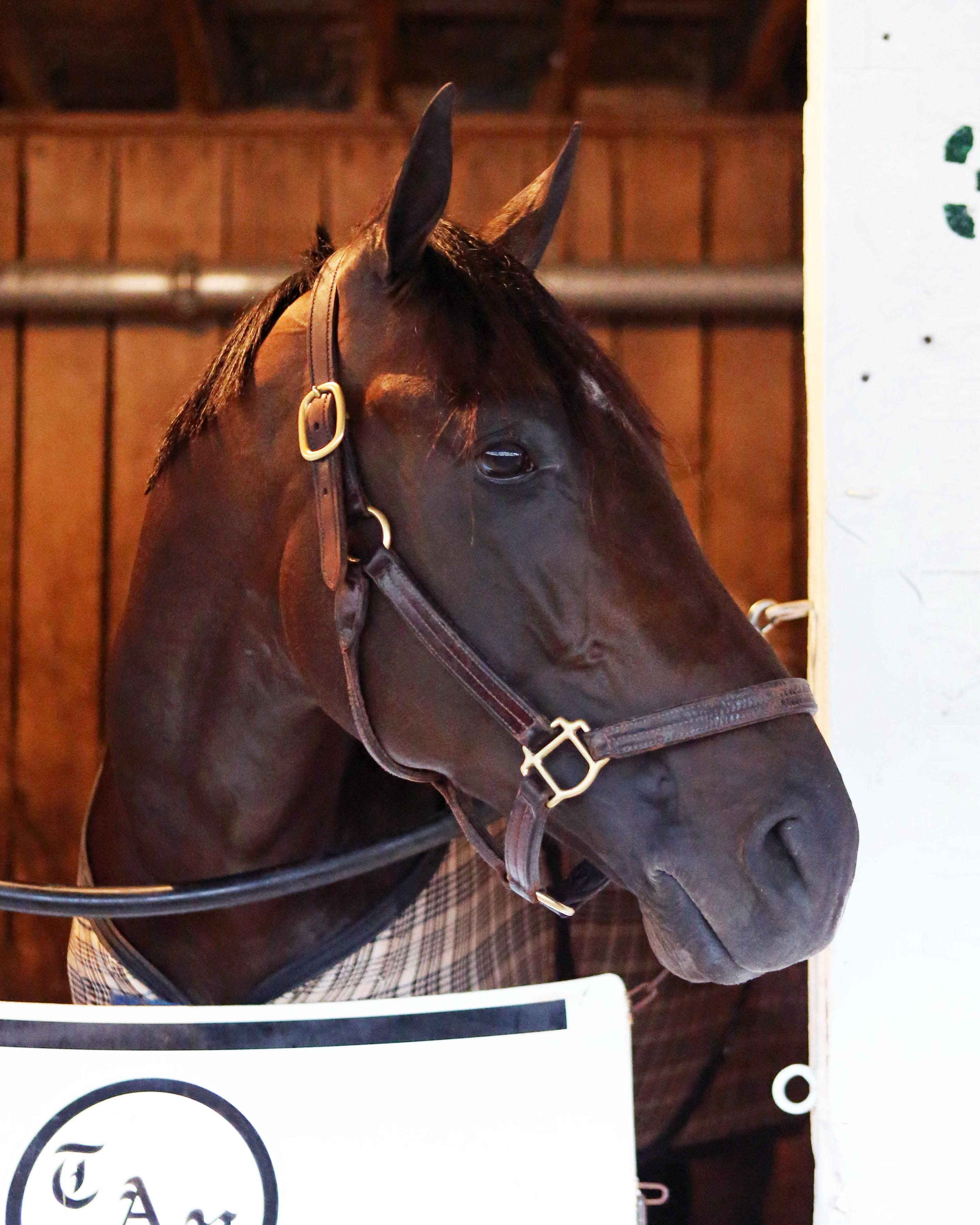 Noble Indy Kentucky Derby Todd Pletcher