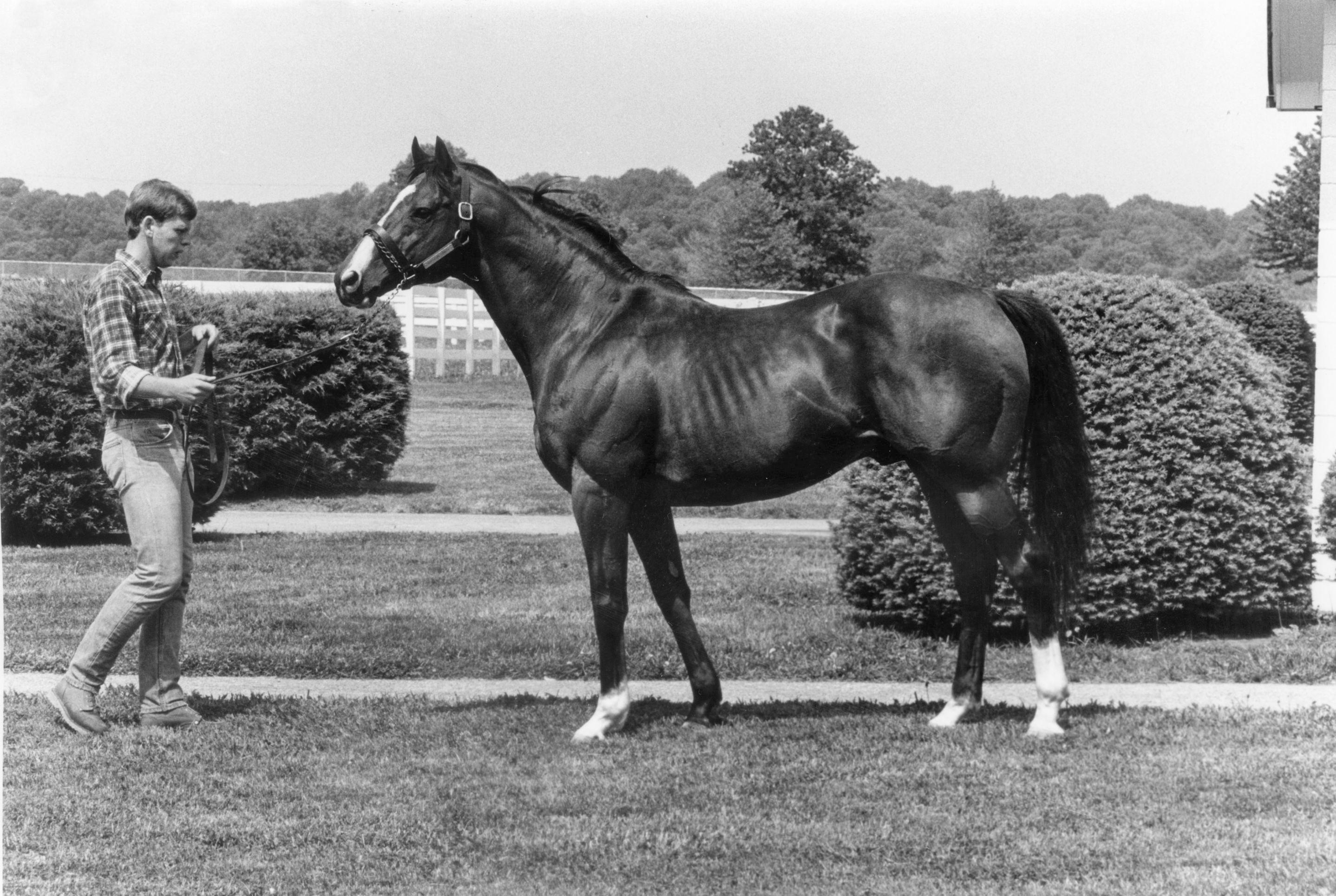 Northern Dancer at stud in 1983