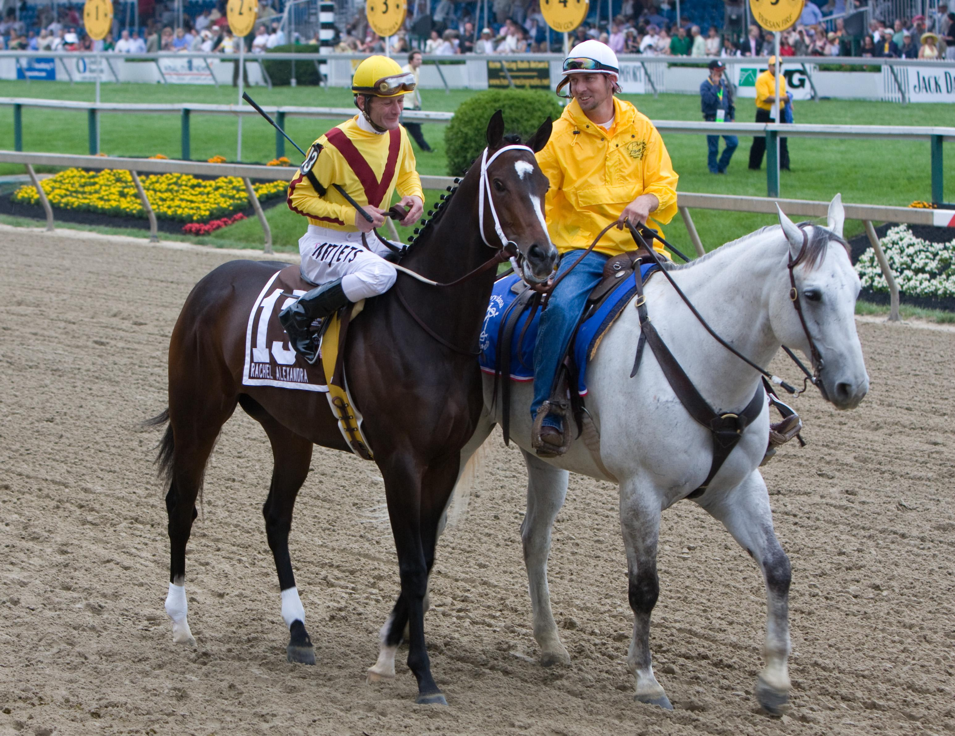 Rachel Alexandra before winning the Preakness