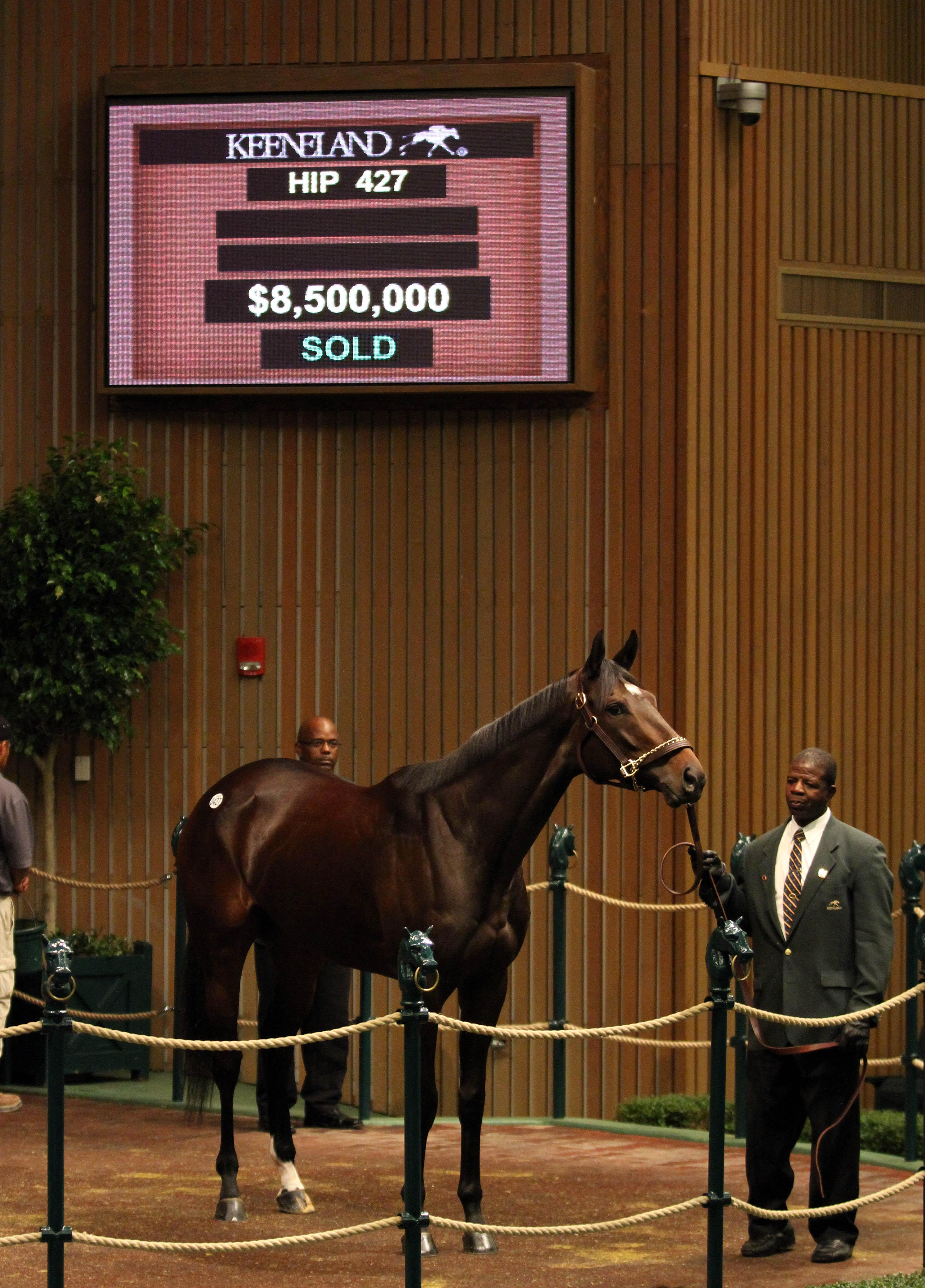 Royal Delta in the Keeneland sale ring.