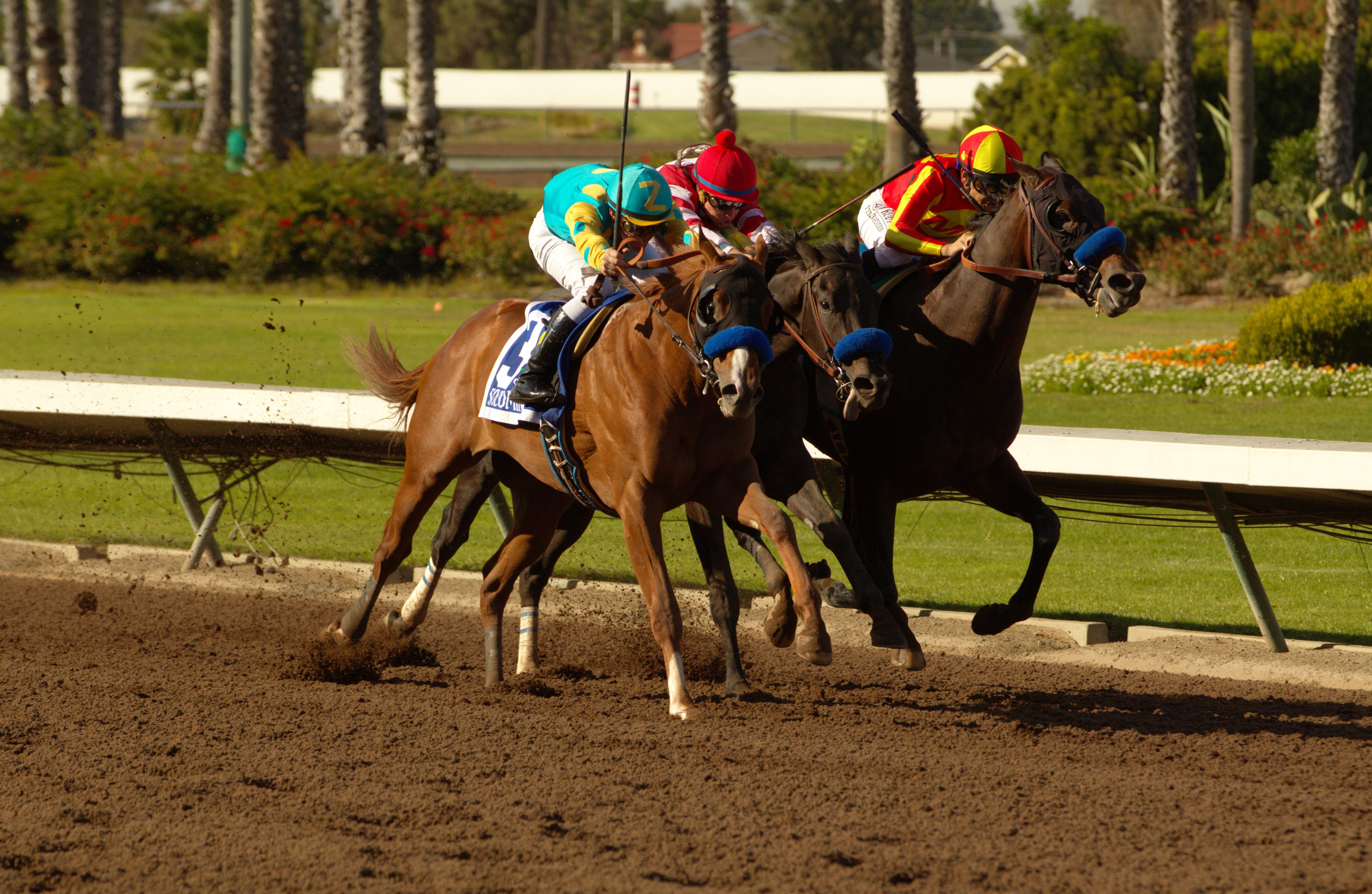 Solomini (outside) battles down the stretch of the Los Alamitos Cash Call Futurity.