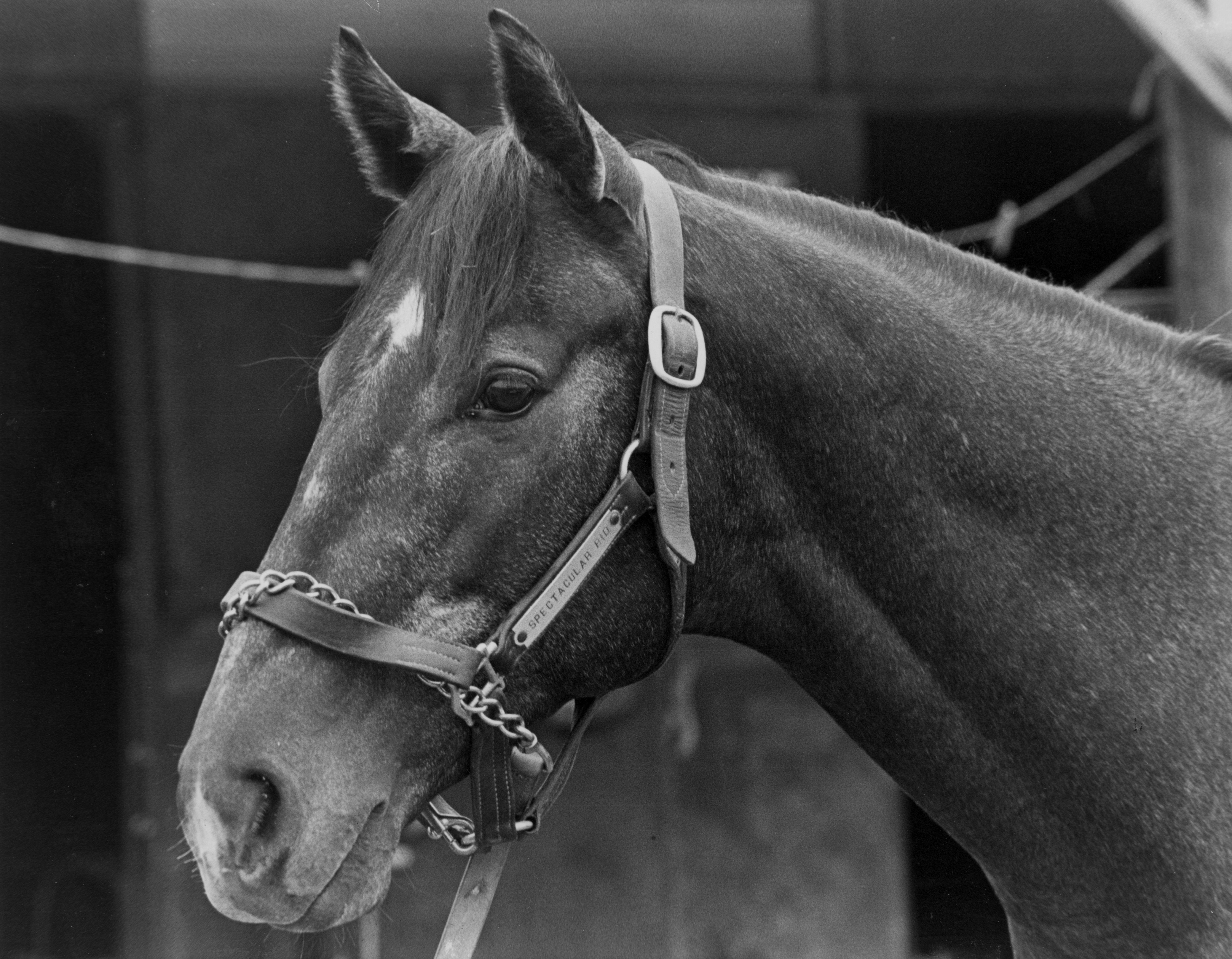 Spectacular Bid in 1978.
