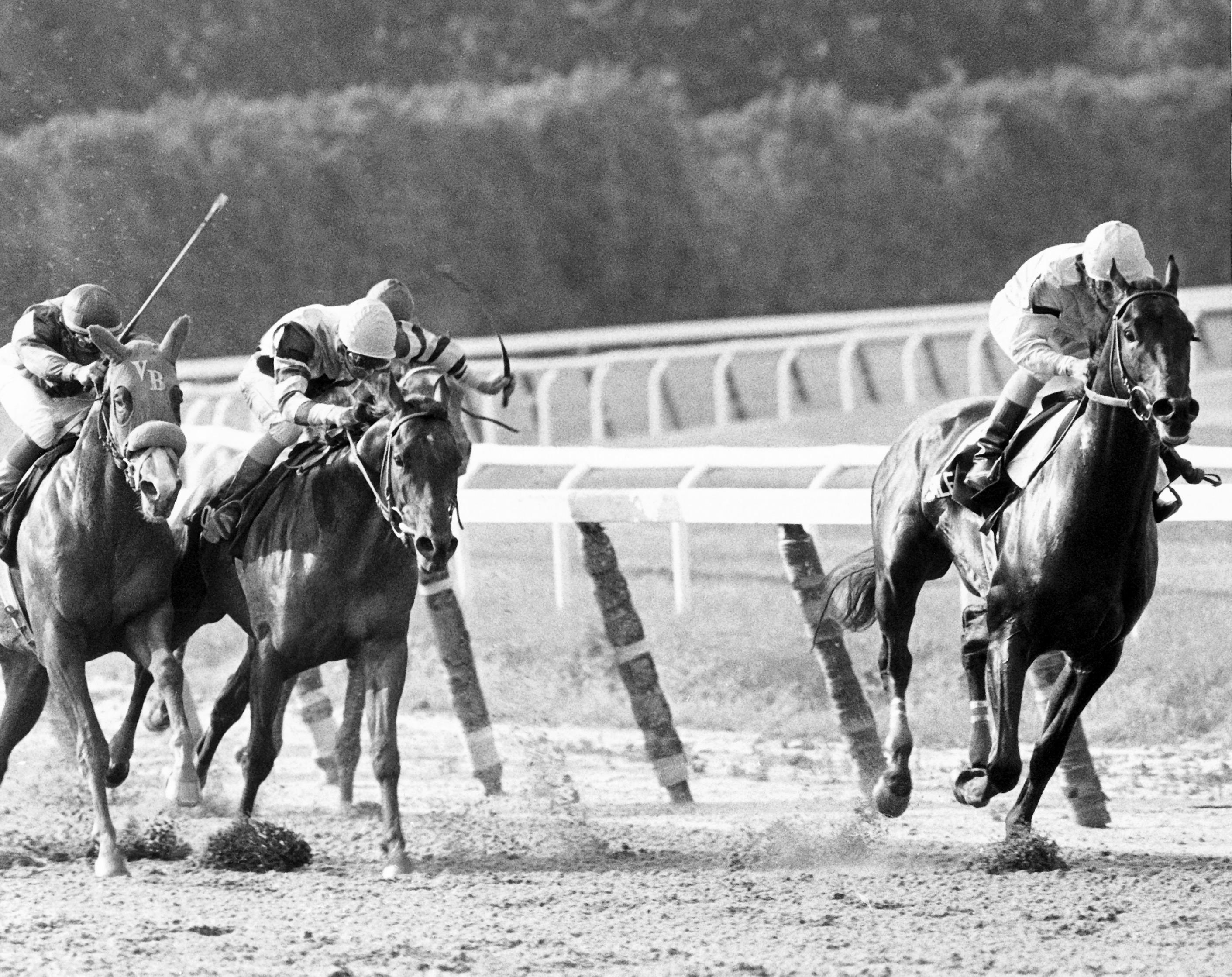 Swale wins the Belmont Stakes.