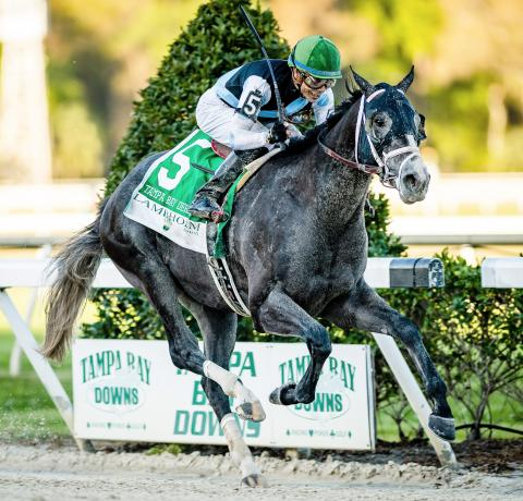 Tapwrit en route to victory in the 2017 Tampa Bay Derby.