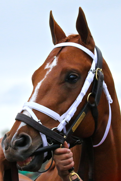 Vino Rosso Todd Pletcher Kentucky Derby