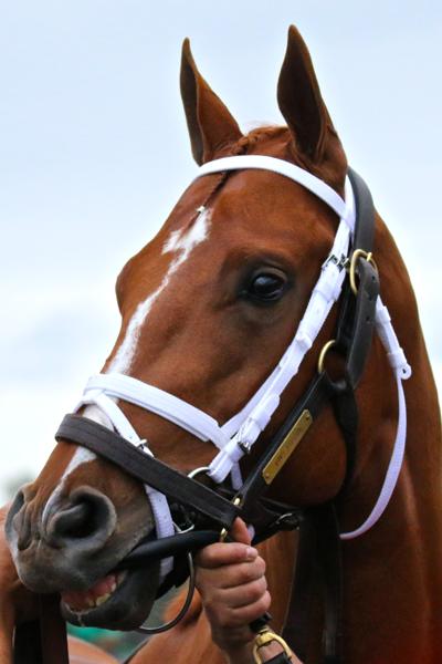 Vino Rosso Todd Pletcher Kentucky Derby