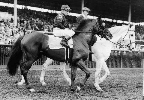 Whirlaway with Wendall Eads up; Pinky Brown on white horse.