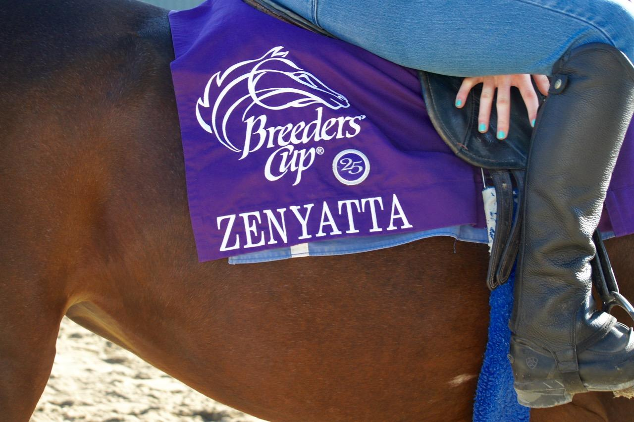 Zellda proudly wore Zenyatta's saddle cloth during Breeders' Cup week at Santa Anita Park.