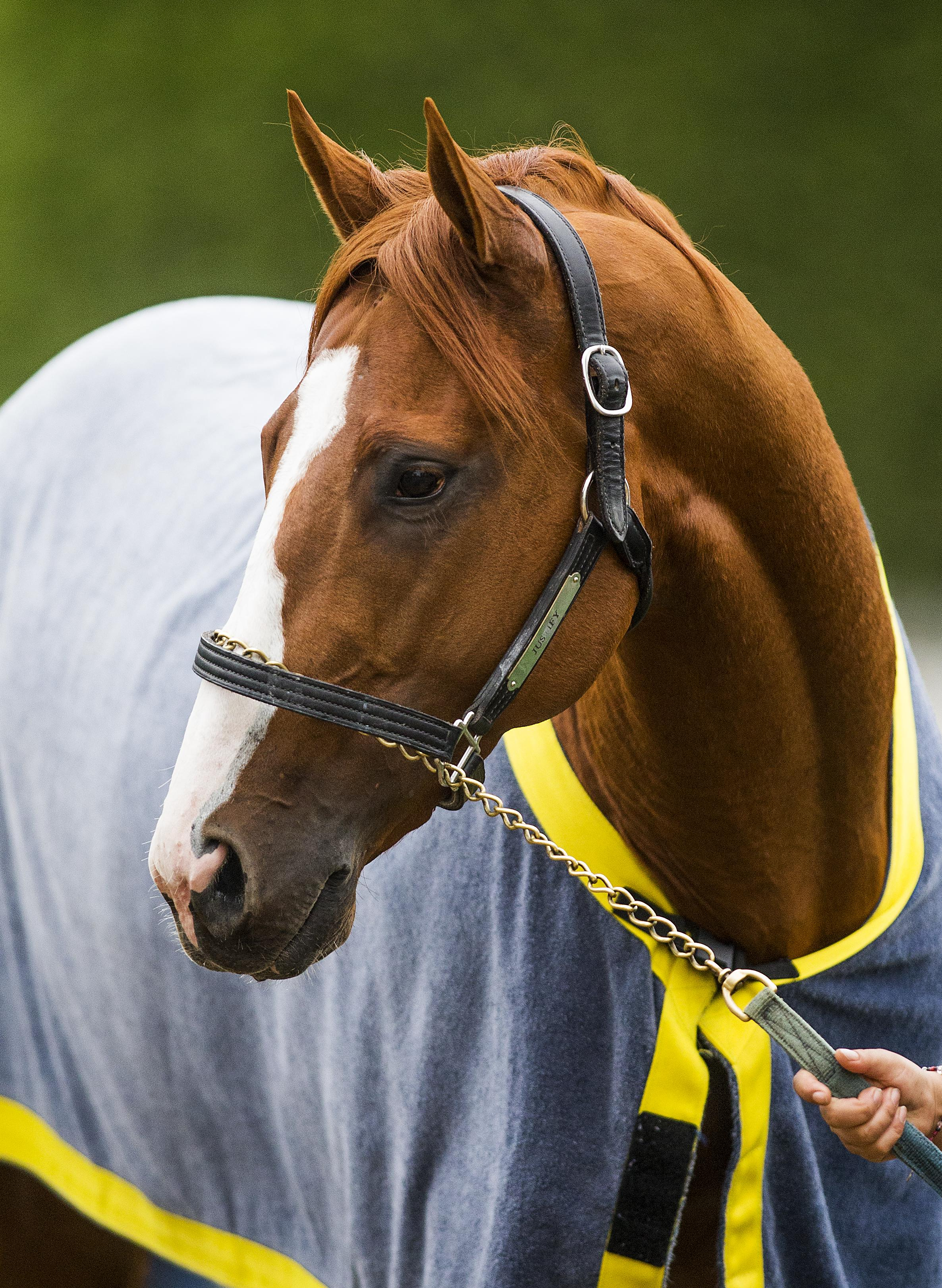 2018 Belmont Stakes Cheat Sheet America S Best Racing