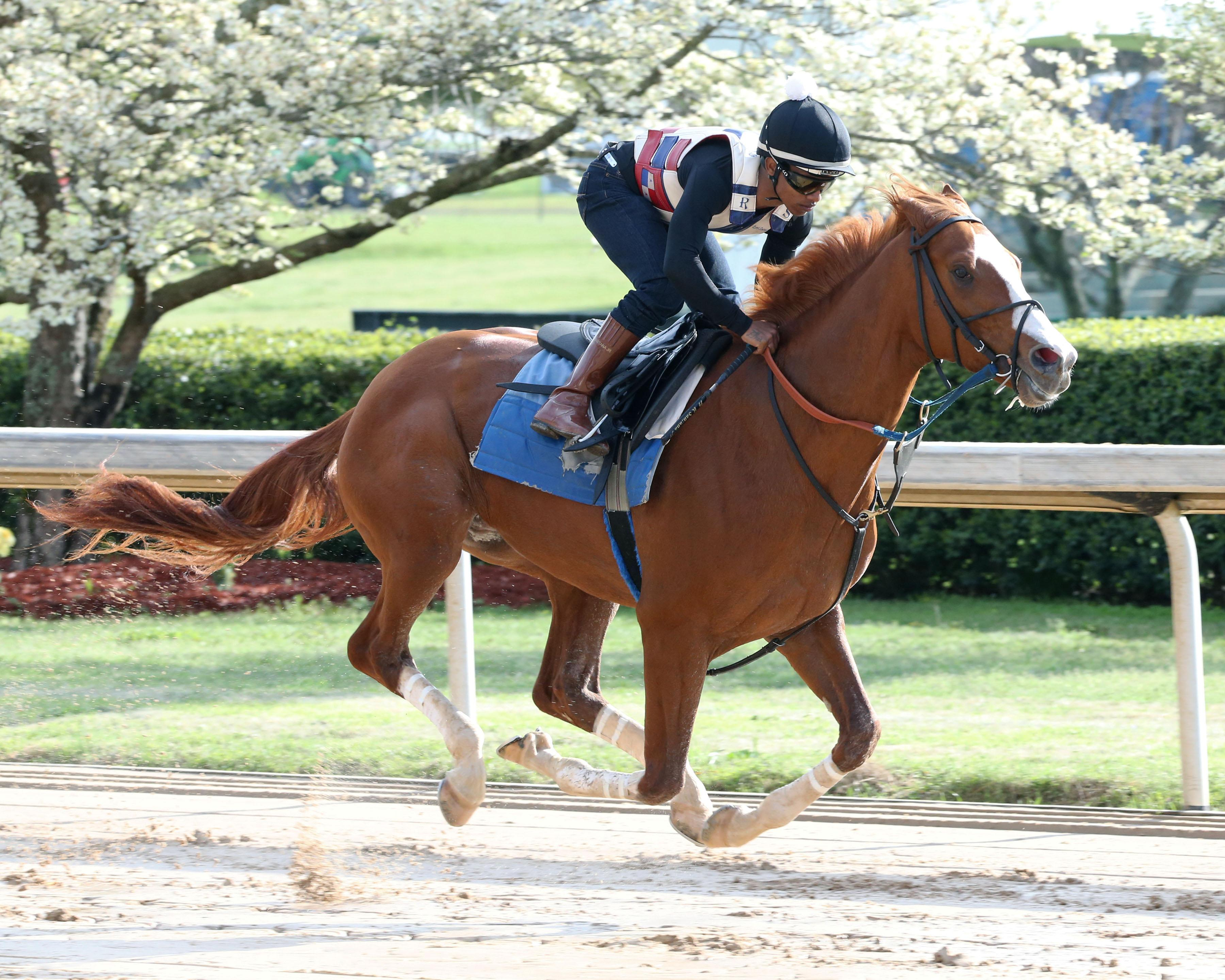 2019 Preakness Stakes Cheat Sheet | America's Best Racing