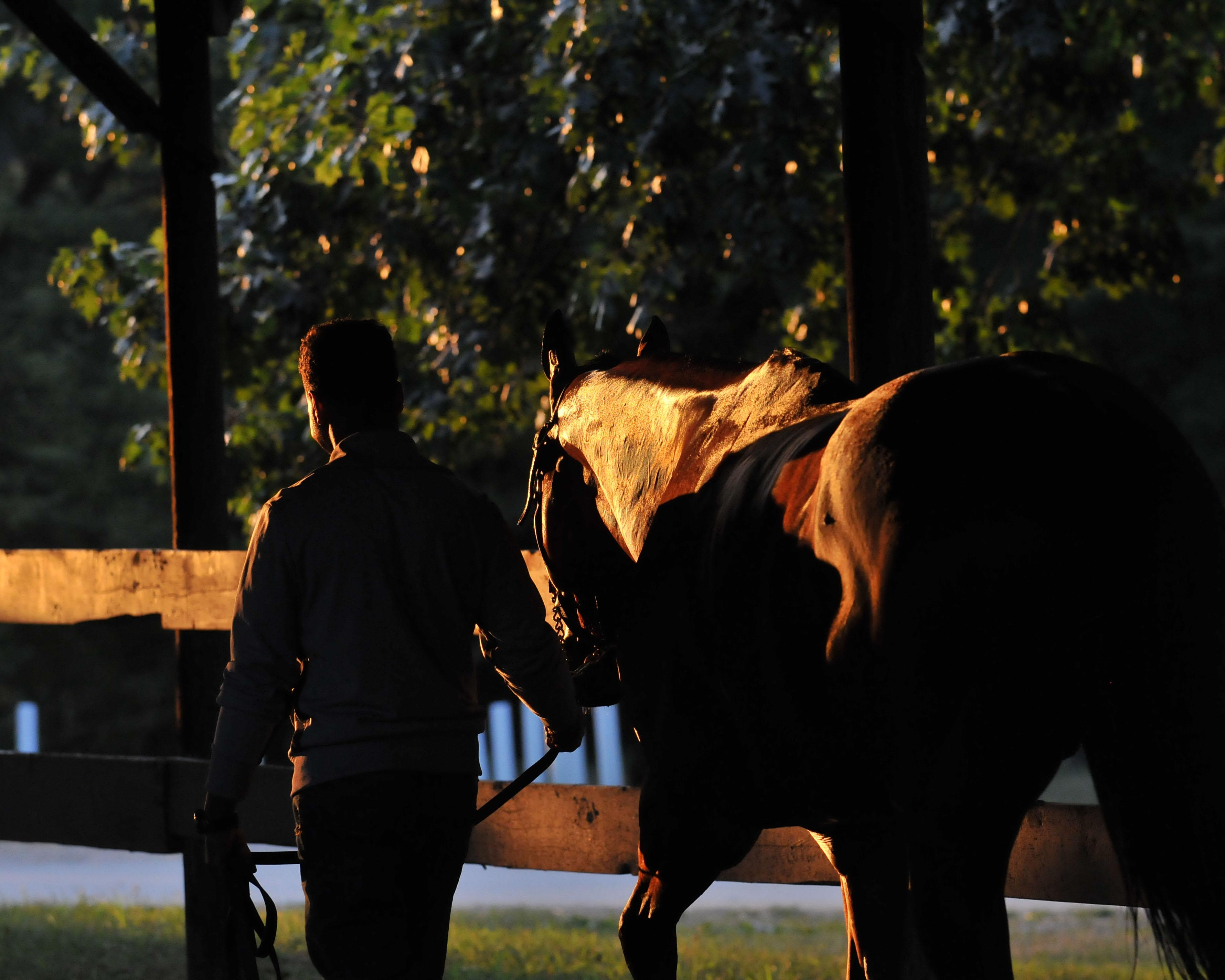 Twenty Quotes To Celebrate National Day Of The Horse