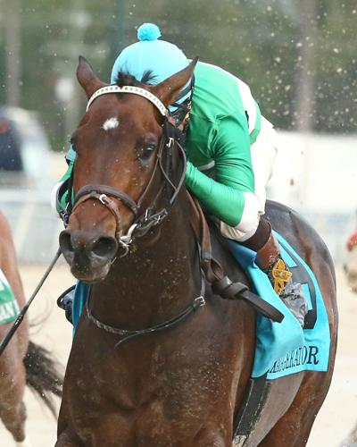 Exaggerator Lives Up To Hype In Delta Downs Jackpot