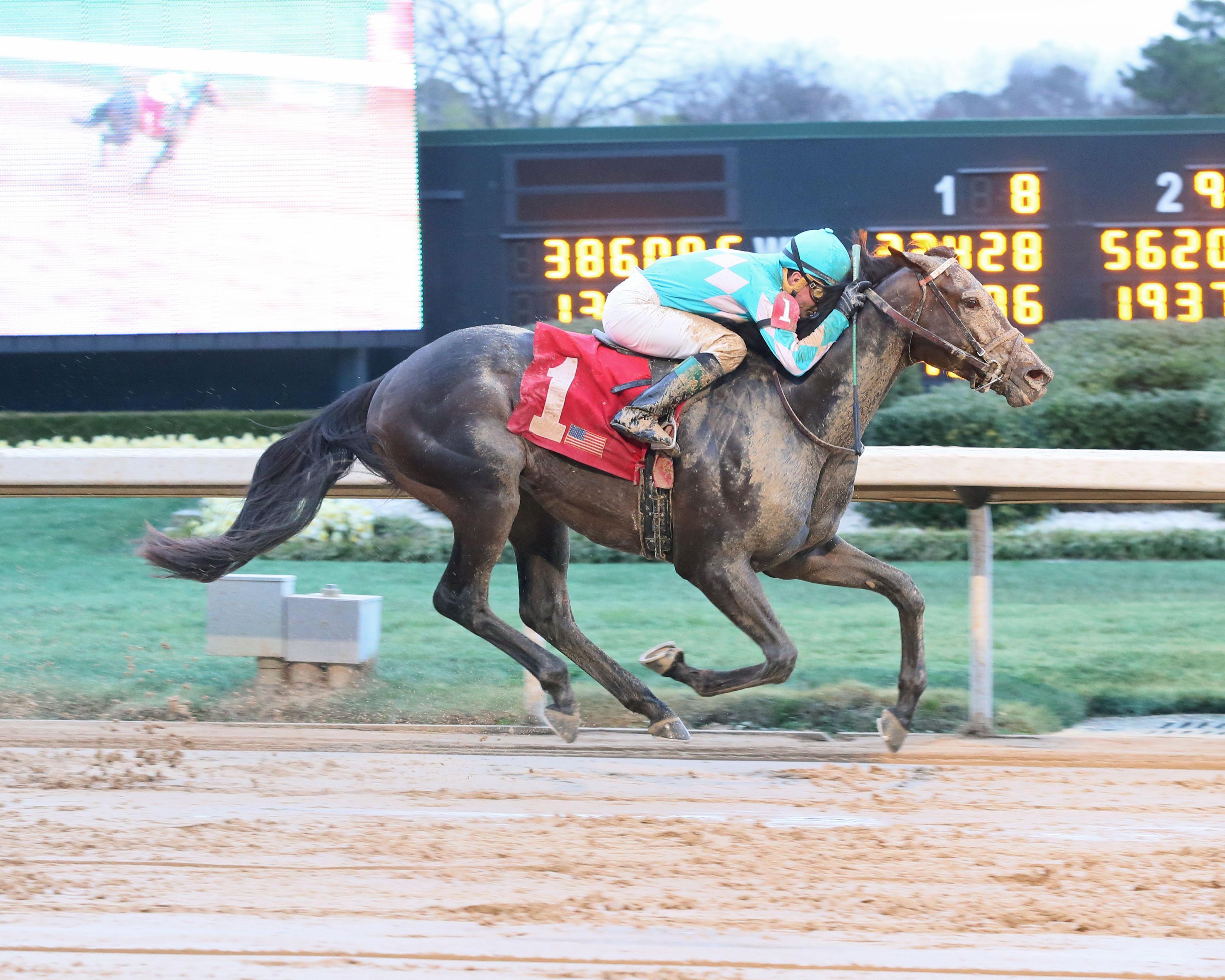 Haskins derby dozen for march 14 americas best racing my boy jack coady photography falaconquin