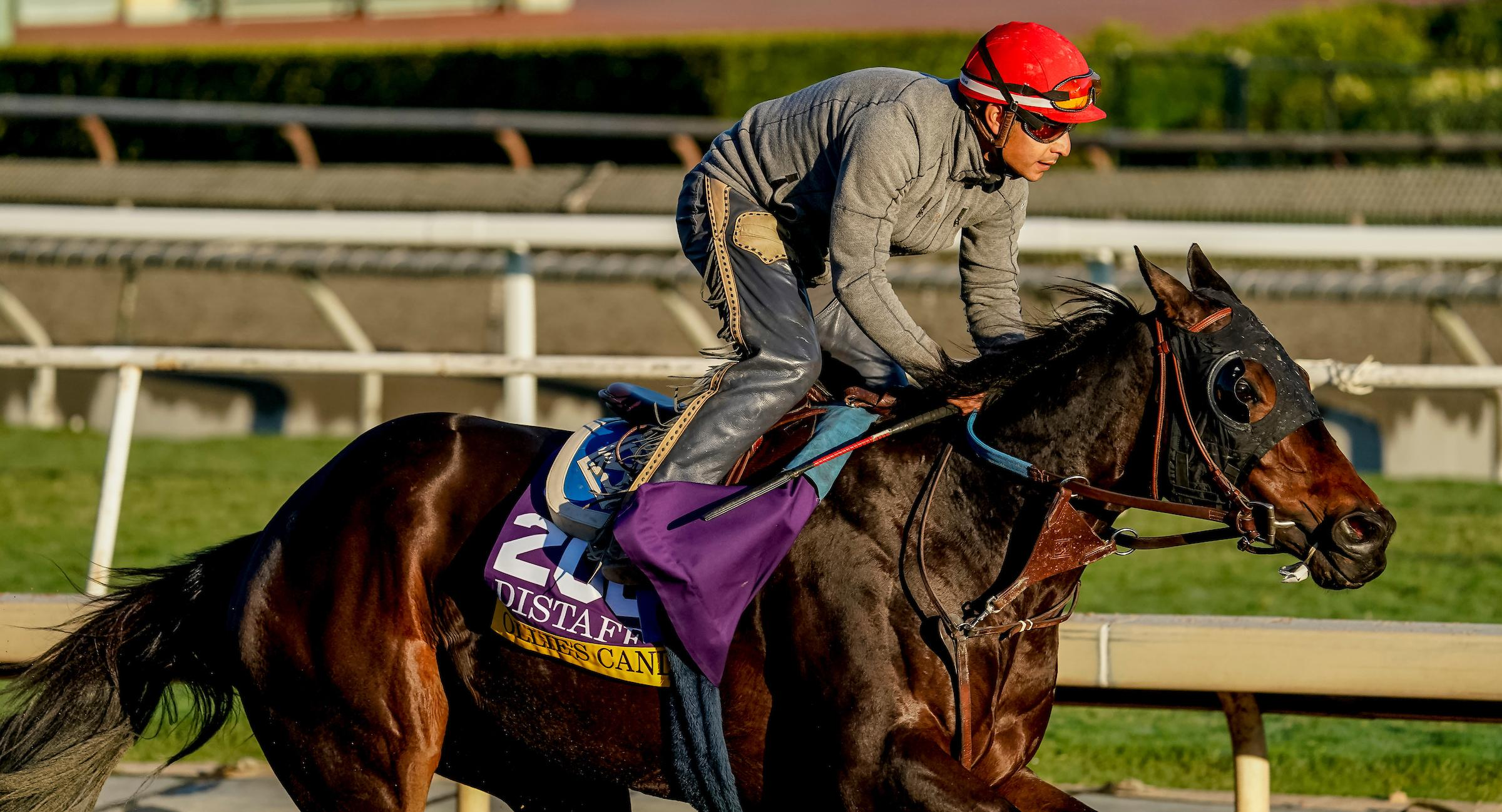 2019 Longines Breeders Cup Distaff Cheat Sheet America