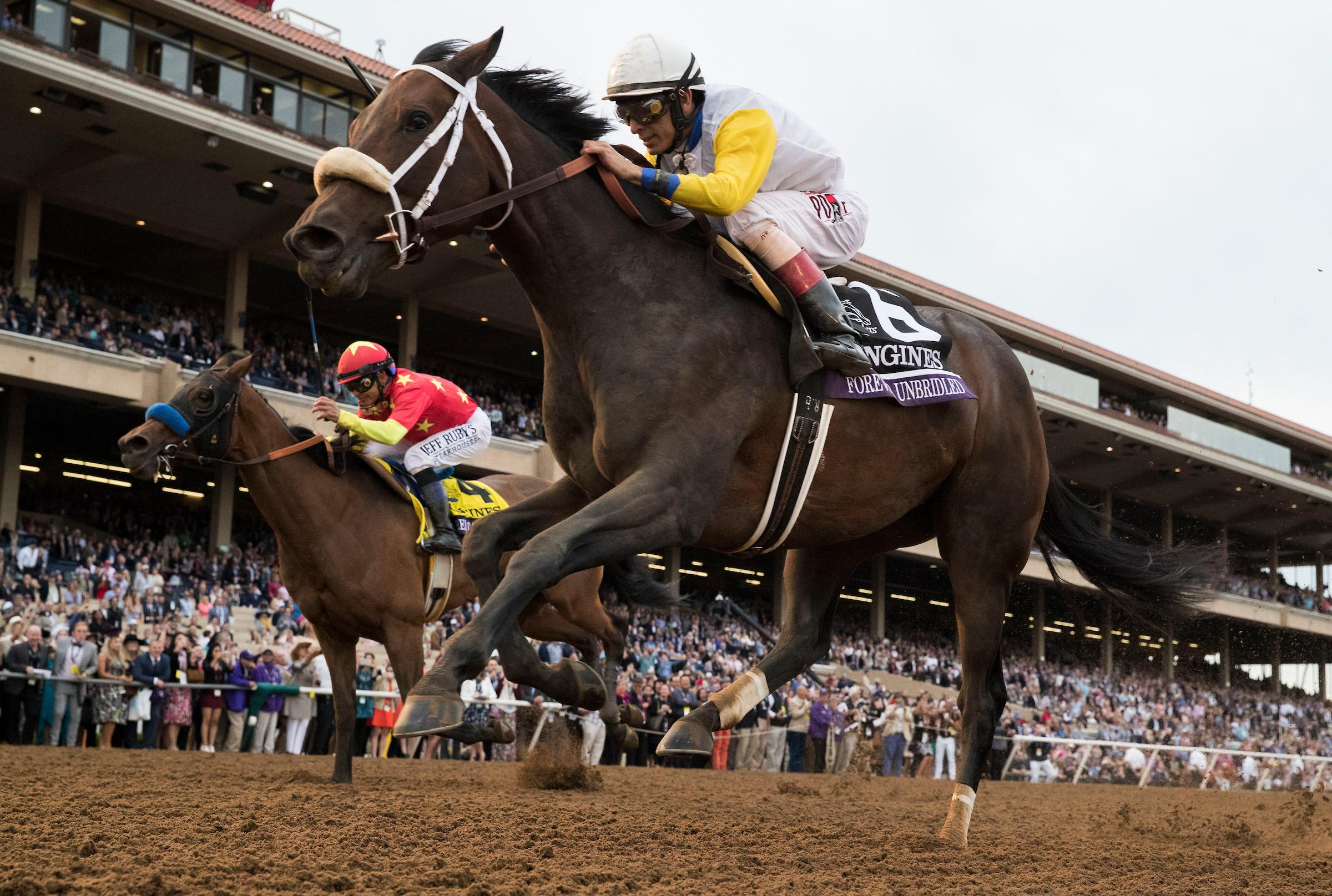 Forever Unbriodled Breeders' Cup Longines Distaff Challenge Series