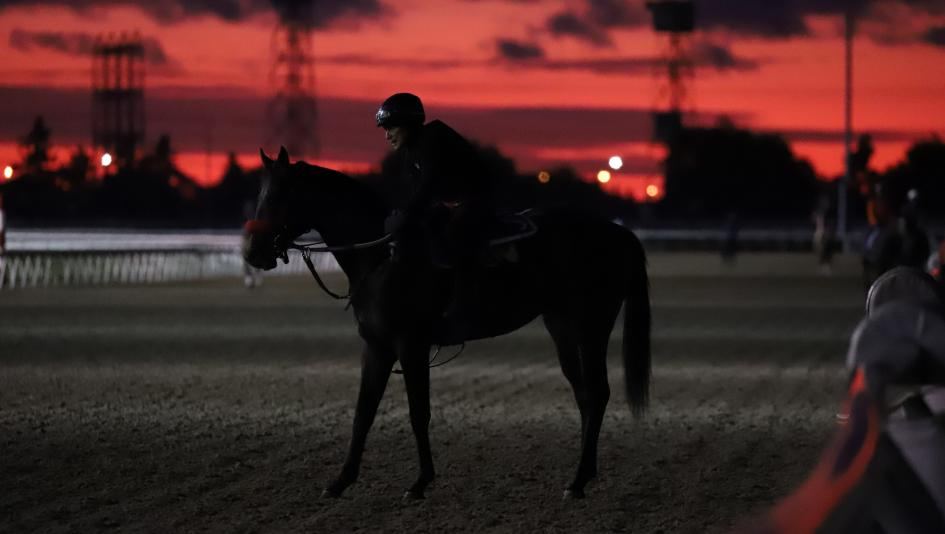 SLIDESHOW: A Spectacular Start to Woodbine Mile Weekend